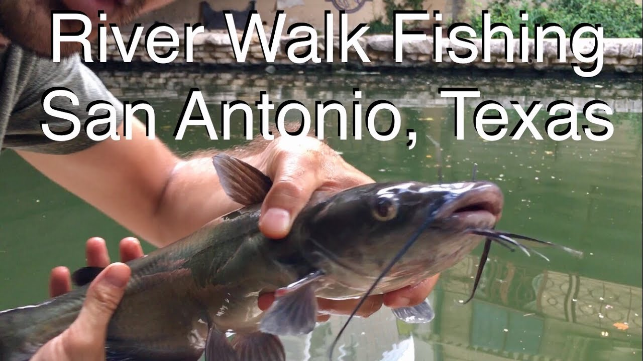 River Walk Fishing San Antonio Texas San Antonio Forum